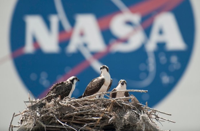 A family of Osprey are seen outside the NASA Kennedy Space Center Vehicle Assembly Building (VAB) in Cape Canaveral, Fla. on Thursday, May 13, 2010. The countdown is on for Friday's scheduled launch of space shuttle Atlantis on its STS-132 mission. At NASA's Kennedy Space Center in Florida, technicians at Launch Pad 39A continue preparations for the liftoff at 2:20 p.m. EDT. The rotating service structure will be moved away from the spacecraft at 5:30 p.m. today. Photo Credit: (NASA/Bill Ingalls)